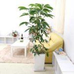 お部屋のインテリア・ギフトにもおすすめ!おしゃれで珍しい観葉植物