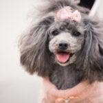 愛犬の防寒着に!冬のかわいい犬用ウェア(犬服)ならペット通販サイトのPEPPY(ペピイ)