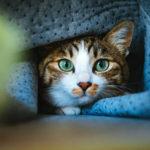 【猫好きさん必見!】かわいい!ペット通販PEPPYの冬の猫グッズ・ネコ雑貨